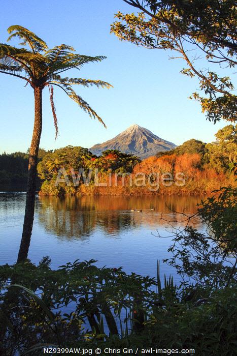 Early morning view of Mount Taranaki from Lake Mangamahoe, New Plymouth, New Zealand