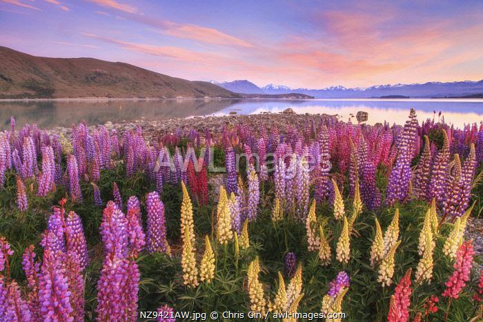 Sunrisre at Lake Tekapo, Canterbury, New Zealand