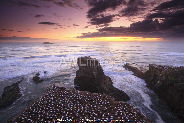 Sunset at Muriwai beach, Auckland, New Zealand