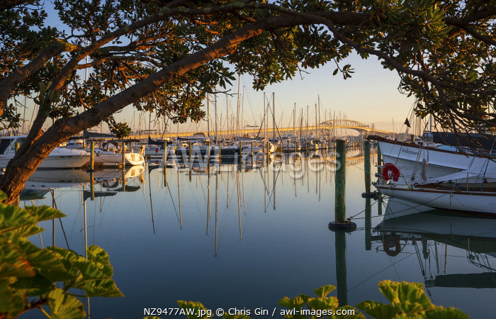 Sunrise from Westhaven marina, Auckland, New Zealand