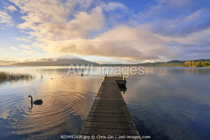 Lake Tarawerea sunrise, Rotorua, New Zealand
