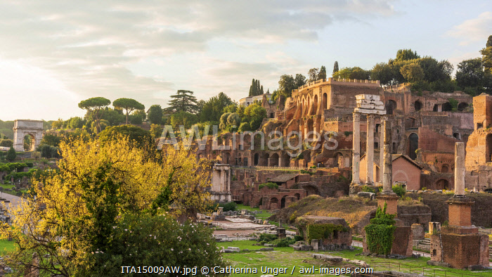 Europe, Italy, Rome. The  forum romanum at sunrise with view towards the Palatine hill and the Arch of Titus.