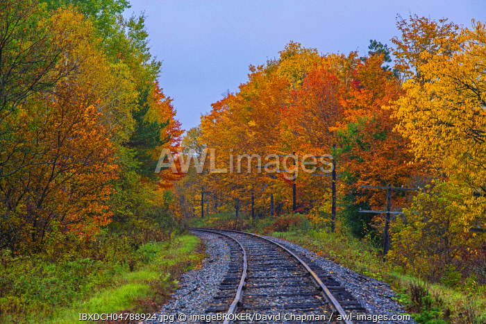 Railway tracks with colorful trees in autumn, Quebec, Canada, North America