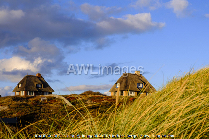 Typical Frisian houses with thatched roofs in the dunes of Hornum, Sylt, Nordfriesland, Schleswig-Holstein, Germany, Europe