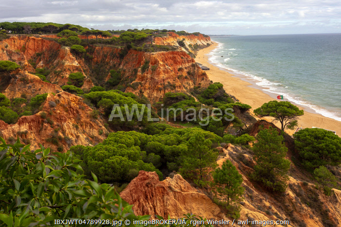 Red sandstone rocks with Stone Pines (Pinus pinea), steep coast Praia da Falesia, Ohlhos de Agua, Albufeira, Algarve, Portugal, Europe
