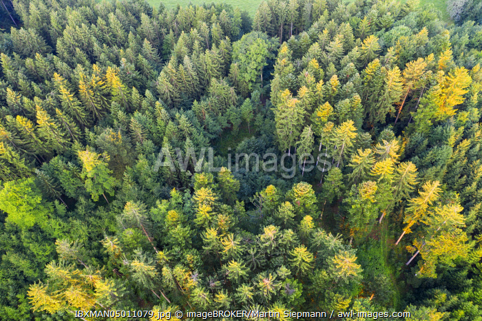 Coniferous forest, Tolzer Land, aerial view, Upper Bavaria, Bavaria, Germany, Europe