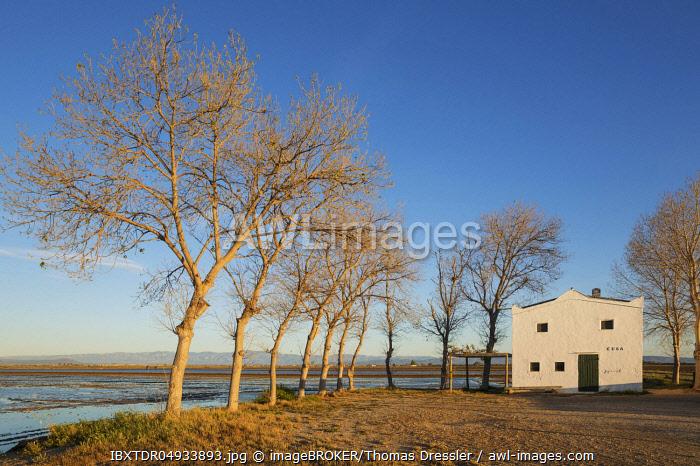Flooded rice field and small farm cottage, Ebro Delta Nature Reserve, Tarragona province, Catalonia, Spain, Europe