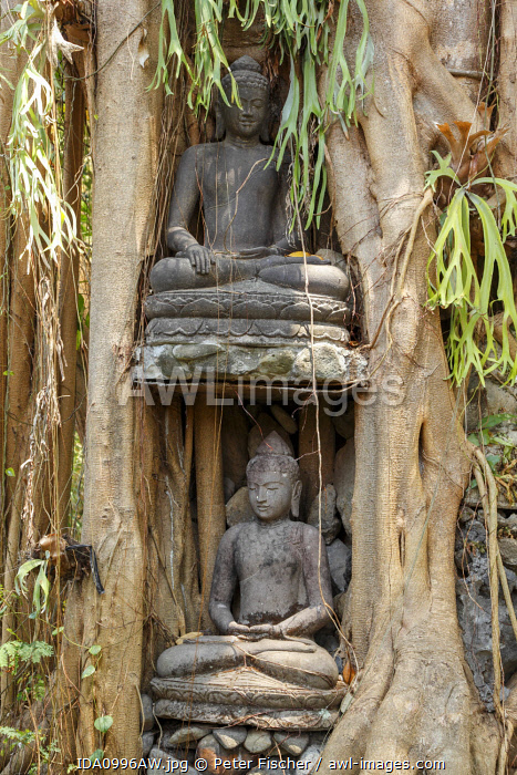 awl-images.com - Indonesia / Indonesia, Bali, Ubud village; stone statue overgrown by fig roots