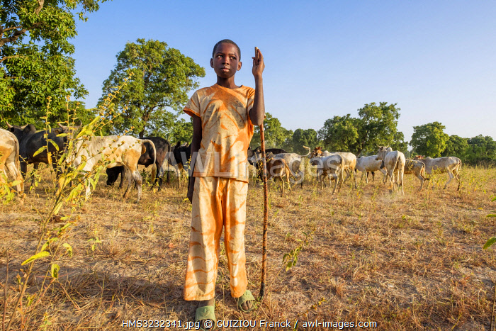 awl-images.com - Burkina Faso / Burkina Faso, Balé province, Boromo, young boy and its herd of zebbus in the countryside