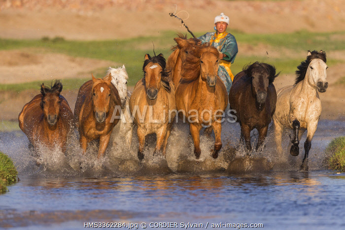 China, Inner Mongolia, Hebei Province, Zhangjiakou, Bashang Grassland, Mongolians traditionnaly dressed with horses running in a group in the water