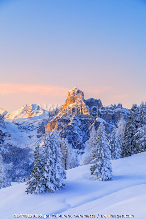 Pralongià plateau winter scenery, in the background the alpenglow on the Sassongher, Corvara in Badia, Alta Badia - Gadertal, Bolzano, South Tyrol, Italy