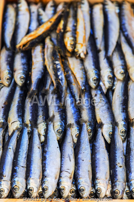 awl-images.com - Spain / Spain. Galicia. Padron. On the route of the Camino Portuges from Porto to Santiago de Compostela. Sardines for sale at the market.