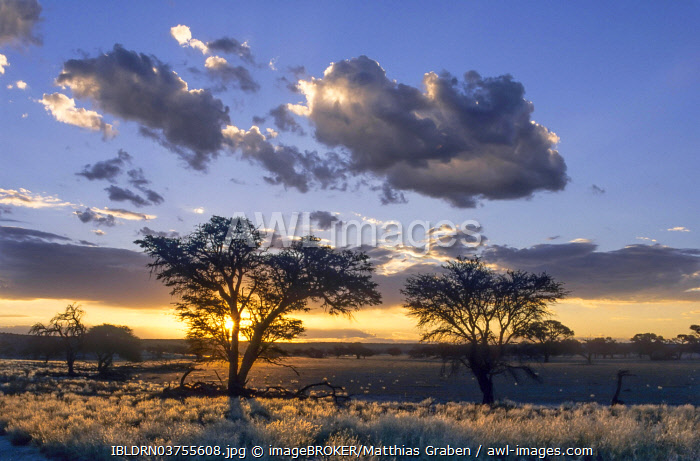 awl-images.com - Botswana / Sunset over the Nossob Valley, Kgalagadi Transfrontier Park, South Africa, Africa