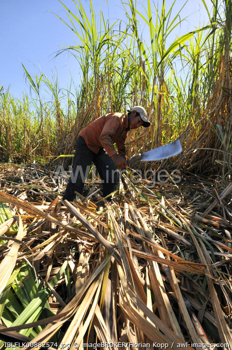 awl-images.com - Boliva / Underage migrant worker harvesting sugar cane for the production of ethanol and biodiesel, Montero, Santa Cruz, Bolivia, South America