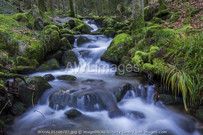 awl-images.com - Germany / Gertelbach, Gertelbach Falls, Gertelbach Gorge, Buhl, Buhlertal, Northern Black Forest, Black Forest, Baden-Wurttemberg, Germany, Europe