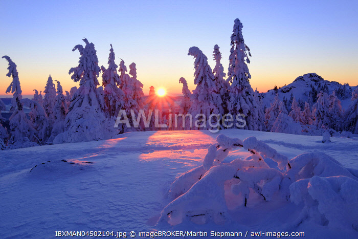 awl-images.com - Germany / Sunset, Arbermandl, snowy spruces, Arber, Natural Preserve Bavarian Forest, Lower Bavaria, Bavaria, Germany, Europe