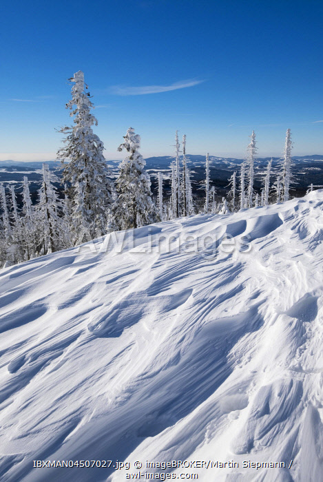 awl-images.com - Germany / Snow drifts, forest with dead trees in the snow, Lusen, Bavarian Forest National Park, Lower Bavaria, Bavaria, Germany, Europe