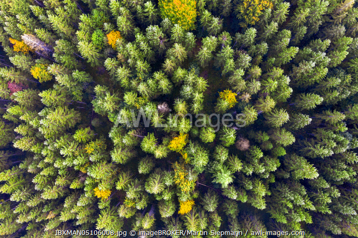 awl-images.com - Germany / Autumn mixed forest from above, near Krun, drone shot, Upper Bavaria, Bavaria, Germany, Europe