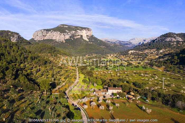 awl-images.com - Spain / Flowering almond trees in Torrent de s' Estornell and Puig d'Alcadena, near Lloseta, Serra de Tramuntana, aerial view, Majorca, Balearic Islands, Spain, Europe