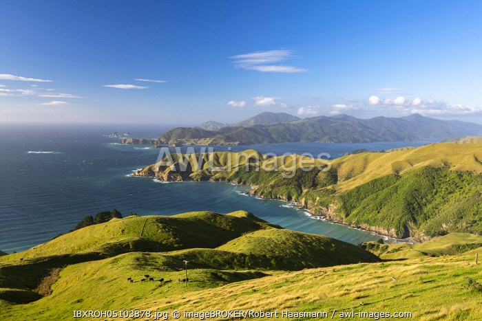 awl-images.com - New Zealand / View of meadows and rocky coast at French Pass, Marlborough region, Marlborough Sounds, Picton, South Island, New Zealand, Oceania