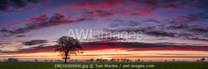 awl-images.com - England / Lone Tree at Sunrise, Norfolk, England