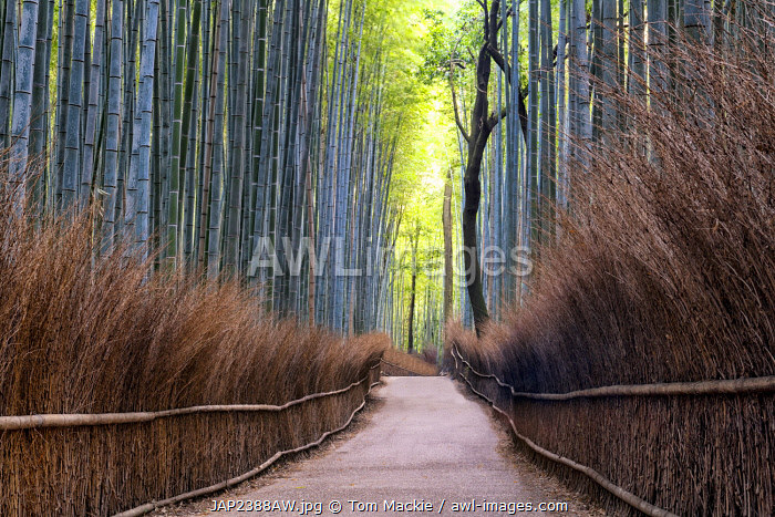 awl-images.com - Japan / Path Through Bamboo Forest, Sagano, Arashiyama, Kyoto, Japan