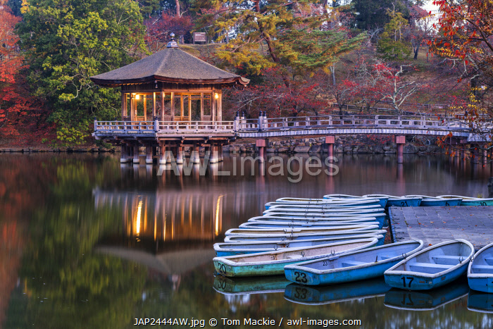 awl-images.com - Japan / Ukimido Pavilion in Autumn, Nara Park, Nara, Kansai, Japan