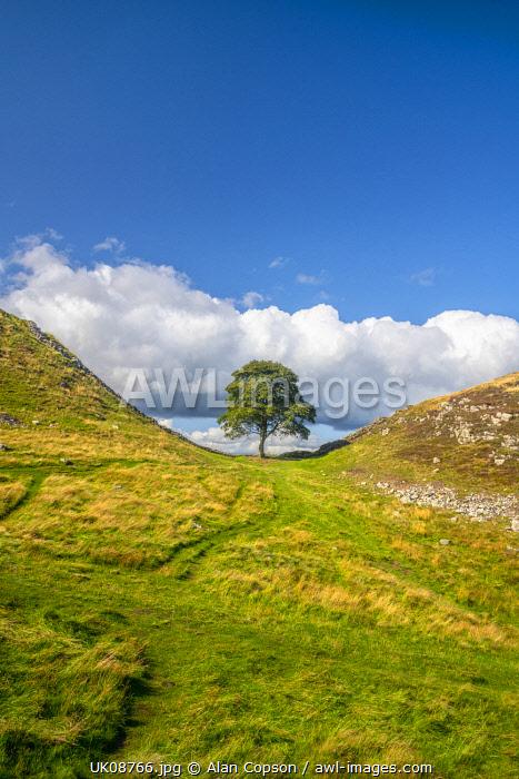 UK, England, Northumberland, Hexham, Henshaw, Hadrian's Wall, Sycamore Gap