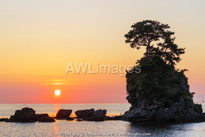 Japan, Honshu, Toyama prefecture, Ameharakaigan, pine tree on a rock outcrop in the sea of Japan, sunrise