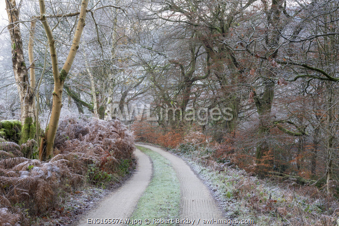 awl-images.com - England / England, West Yorkshire, Hebden Bridge. A track through frosty vegetation in late November.