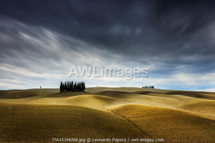 Cypresses and rolling hills near Montalcino, Val d'Orcia, Tuscany, Italy