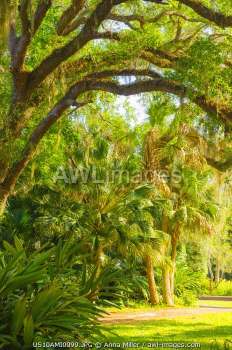 USA, Florida. Botanical gardens, Washington Oaks Gardens State Park.