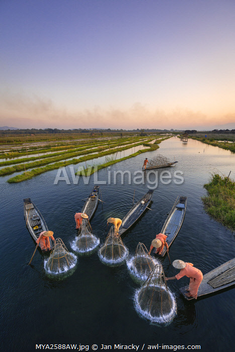 awl-images.com - Myanmar / High angle of five traditional fishermen fishing together using conical nets, Lake Inle, Nyaungshwe Township, Taunggyi District, Shan State, Myanmar
