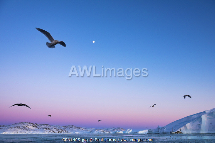awl-images.com - Greenland / Moon rising above icebergs in the Kangia Icefiord