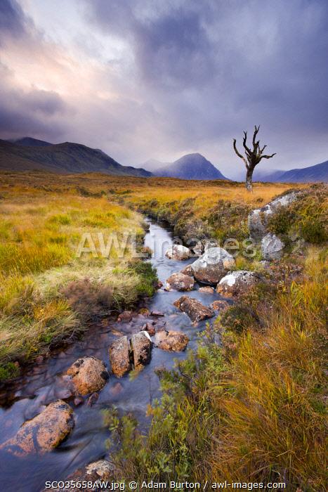 Stream running through Rannoch Moor wilderness, Highland, Scotland