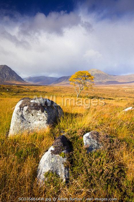Autumn scenery on Rannoch Moor, Scottish Highlands, Scotland