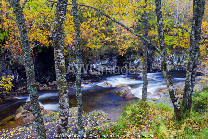 River Etive surrounded by trees in full autumn colours, Glen Etive, Highlands, Scotland
