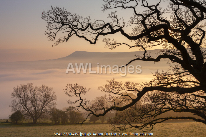 Misty dawn looking towards Mynydd Llangorse in the Brecon Beacons National Park, Powys, Wales, UK.