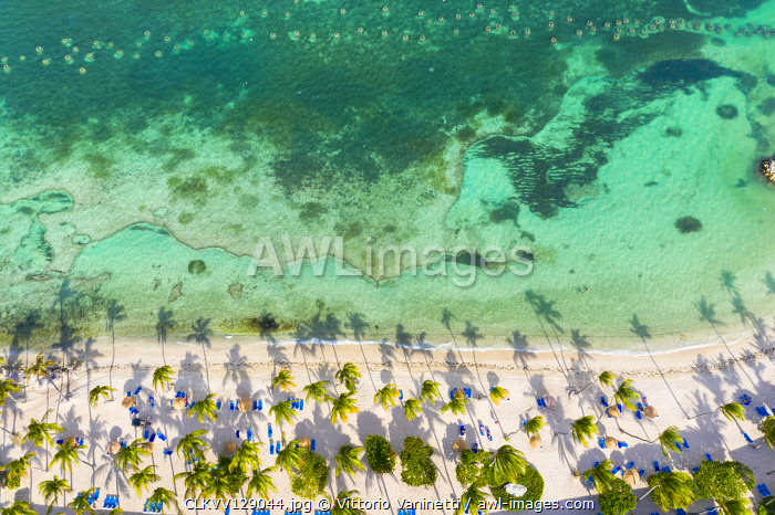 Palm-fringed beach washed by Caribbean Sea from above by drone, St. James Bay, Antigua, Leeward Islands, West Indies,