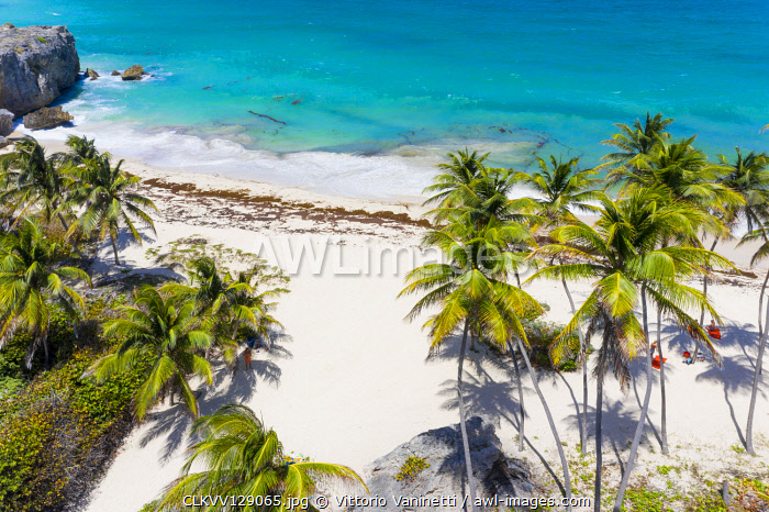 Tall palm trees lean over the white sands of Bottom Bay beach, in Barbados.