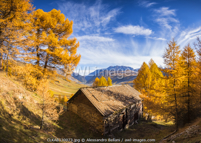 The hut in the woodland, Livigno, Province of Sondrio, Lombardy, Italy