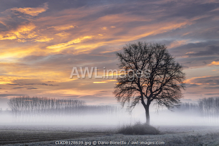Turin province, Piedmont,Italy Magic winter sunrise in the Piedmont plain