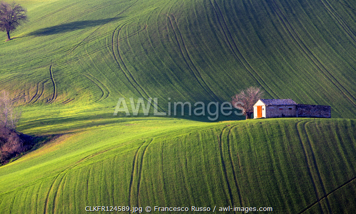 Fields cultivated in the Marche countryside, Monte San Giusto village, Macerata district, Marche, Italy