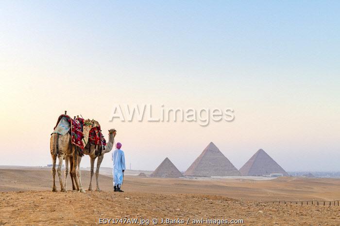Man and his camels at the  Pyramids of Giza, Giza, Cairo, Egypt