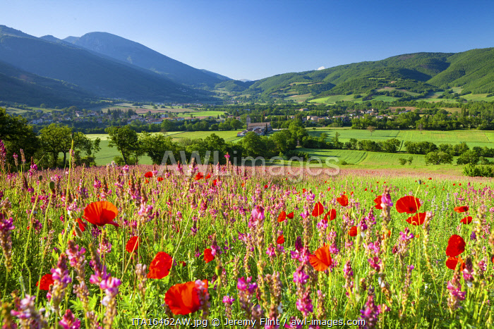 awl-images.com - Italy / Common poppies and wild flowers in farmland in the Valnerina near Campi, Monti Sibillini National Park, Umbria, Italy