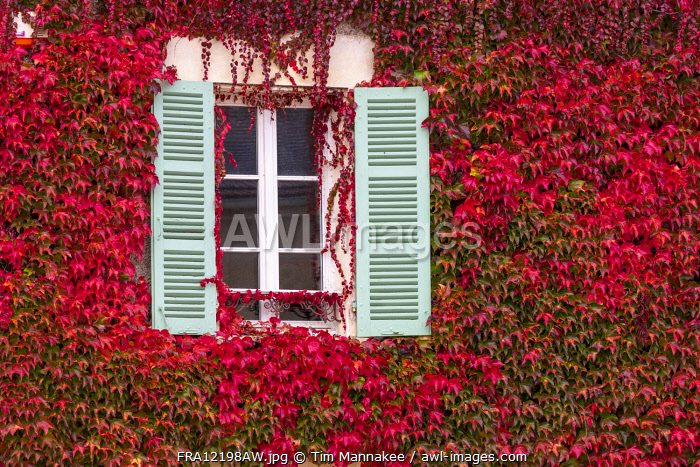 awl-images.com - France / France, Bourgogne-Franche-Comté, Burgundy, Tanlay, a window surrounded by red ivy