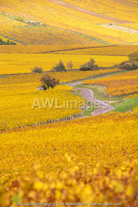 awl-images.com - France / France, Bourgogne-Franche-Comt�, Burgundy, Chablis, a road winds through vineyards near the Chablis region