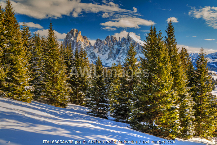 awl-images.com - Italy / Scenic winter view of Seiser Alm - Alpe di Siusi with Sassolungo - Langkofel massif in the background, Dolomites, Alto Adige - South Tyrol, Italy