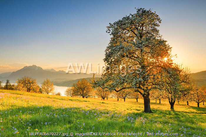 awl-images.com - Switzerland / View of Pilatus and Lake Lucerne, Switzerland, Europe