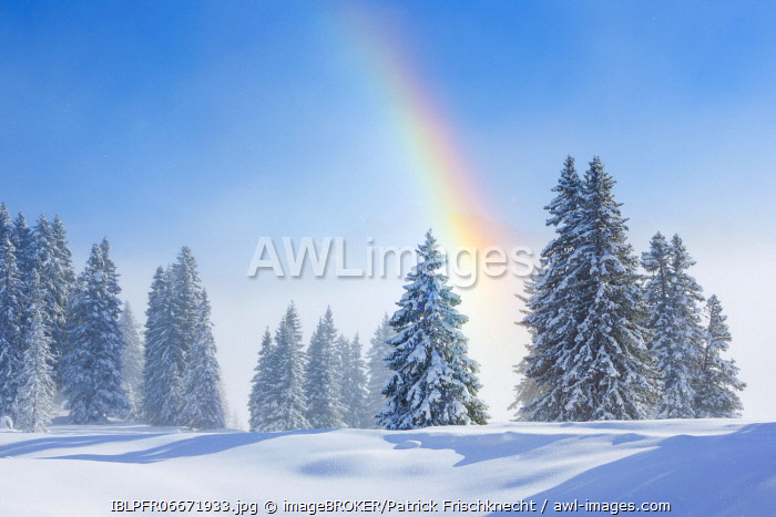 awl-images.com - Switzerland / Snowy firs with rainbow, Switzerland, Europe